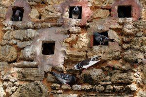 Don't Pigeonhole Those You Lead
